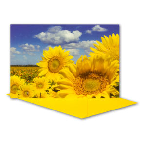 Glückwunschkarte, Sonnenblumenfeld