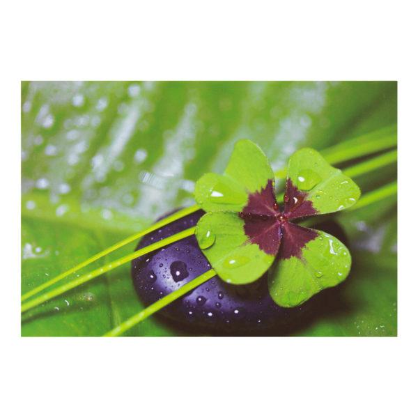 Glückwunschkarte, Kleeblatt mit Wassertropfen und Stein